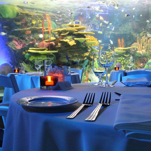 Ripleys Valentine's Dinner - table set-up with view of aquarium
